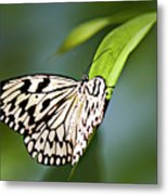 Rice Paper Butterfly 5 Metal Print