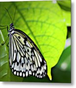 Rice Paper Butterfly 6 Metal Print