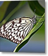 Rice Paper Butterfly 8 Metal Print