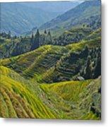 Rice Terraces In Guilin, China  Metal Print