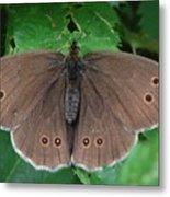 Ringlet Butterfly Metal Print