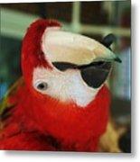 Ringo The Ruby Macaw Metal Print