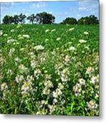 Roadside Wildflowers In Mchenry County Metal Print