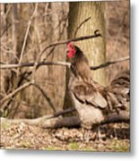 Rooster In The Woods Metal Print