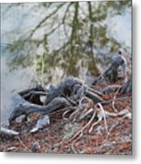 Rooted Lake Edge Metal Print