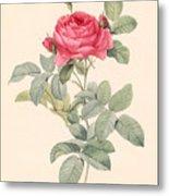 Rosa Gallica Pontiana Metal Print