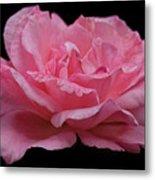 Rose - Flower Metal Print