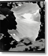 Rose Of Sharon In Black And White Metal Print