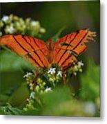 Ruddy Daggerwing Butterfly Metal Print