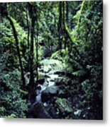 Rushing Stream El Yunque National Forest Metal Print