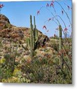 Saguaro National Park East Scene Iv Metal Print