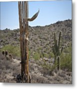 Saguaro Skeleton Metal Print