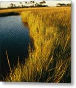 Salt Marsh, Assateague Island, Virginia Metal Print