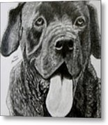 Sampson Metal Print