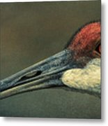 Sandhill Crane Portrait Metal Print