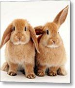 Sandy Lop Rabbits Metal Print