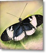 Sapho Longwing Butterfly Metal Print