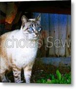 Sapphire Eyed Cat Metal Print