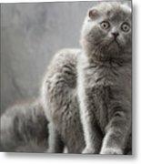 Scottish Fold Cats Metal Print by Evgeniy Lankin