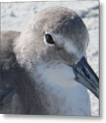Sea Birds Sanibel Island Metal Print
