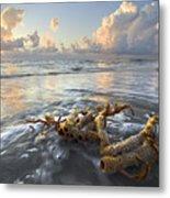 Sea Jewel Metal Print