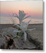 Summer Sea Lilies Metal Print