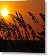 Sea Oats At Sunset Metal Print