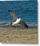 Seagull Landing Metal Print