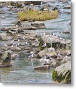 Seagulls On The Rocks Metal Print