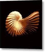 Seashell 1 Metal Print