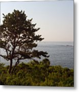 Seaside Pine Metal Print