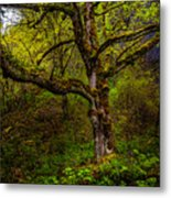 Secluded Tree Metal Print