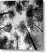 See The Darkness Metal Print