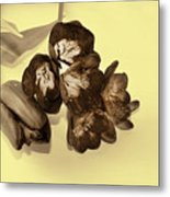 Sepia Flowers Metal Print