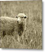 Sheep In A Meadow Metal Print