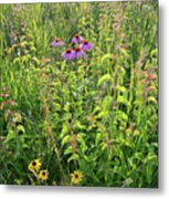 Shelley Kelly Prairie Wildflowers Metal Print