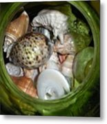 Shells Under Glass Metal Print