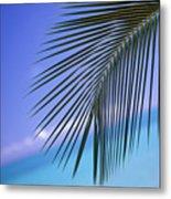 Single Palm Frond Metal Print