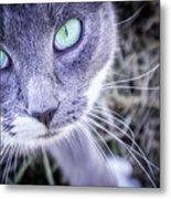 Skitty Cat Metal Print