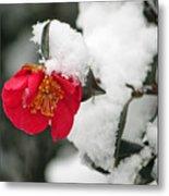 Snow Bloom Metal Print by Suzanne Gaff