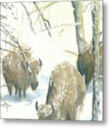 Snow Buffs Metal Print