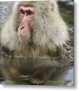 Snow Monkey Bath Metal Print