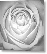 Soft Petals Metal Print