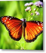 Soldier Butterfly Metal Print