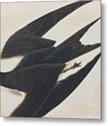 Sooty Tern Metal Print
