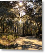 Southern Oak Shadows  Metal Print