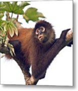 Spider Monkey Metal Print