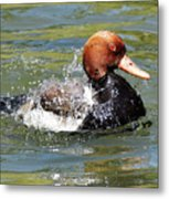 Splash Time Metal Print