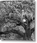 Sprawling Live Oak Metal Print