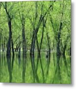 Spring Green Reflections  Metal Print by Lori Frisch